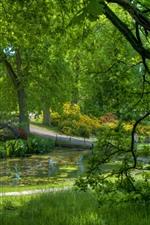 Parque, árvores verdes, grama, flores, lagoa, bela paisagem