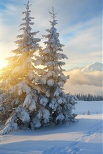 Preview iPhone wallpaper Snow, trees, sunrise, fog, mountains, winter