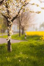 Primavera, flores, flores amarelas de colza