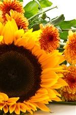 iPhone壁紙のプレビュー ひまわりと菊、黄色い花、白い背景