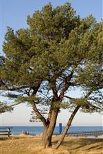 Árvore, cais, ponte, mar, grama