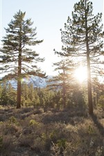Preview iPhone wallpaper Trees, forest, grass, sunshine, summer
