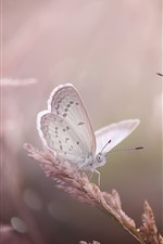 Preview iPhone wallpaper Two butterflies, grass, insect, hazy