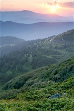 Preview iPhone wallpaper Ukraine, Carpathians, morning, mountains, fog, forest, sunrise