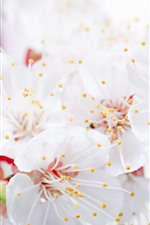 Preview iPhone wallpaper White apple flowers, petals, pistil, hazy, spring