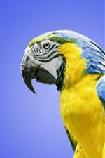 iPhone壁紙のプレビュー 青と黄色の羽のコンサゴ、オウム