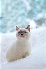 iPhone壁紙のプレビュー 青い目の猫、見て、雪、冬