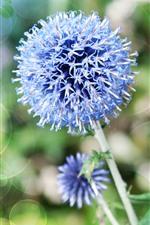 Preview iPhone wallpaper Blue little flowers, flower ball, stem, light circles