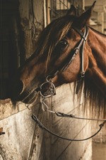 Preview iPhone wallpaper Brown horse, stay, window