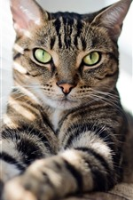 Cat look, green eyes, window, sunshine
