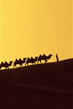 Preview iPhone wallpaper Desert, dune, camels, silhouette