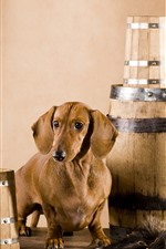 Preview iPhone wallpaper Dog and barrel