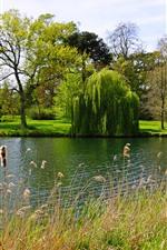 Aperçu iPhone fond d'écranAngleterre, Peterborough, Parc, saule, arbres, lac, herbe