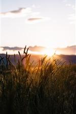 iPhone壁紙のプレビュー 草、シルエット、日没、空、雲、夕暮れ