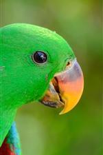 iPhone壁紙のプレビュー グリーンオウム、鳥、くちばし、アイ