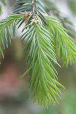 Preview iPhone wallpaper Green plants, fir twigs, needles