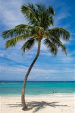 Preview iPhone wallpaper Lonely palm tree, beach, sea, tropical, blue sky