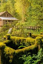 Vorschau des iPhone Hintergrundbilder Mühle, Fluss, Bäume, Moos, USA