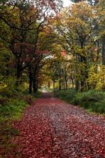 Парк, деревья, путь, красные листья, осень