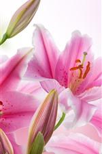 iPhone壁紙のプレビュー ピンクのユリ、花、花びら、ピストリ