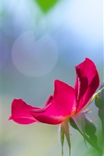 Preview iPhone wallpaper Pink rose petals, green leaves, hazy