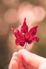 iPhone壁紙のプレビュー 赤いカエデの葉、手、怠け者