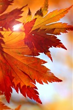Preview iPhone wallpaper Some red maple leaves, sun rays, glare, autumn