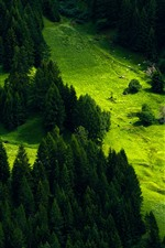 Preview iPhone wallpaper Switzerland, mountain, slope, houses, trees, green
