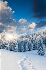 Preview iPhone wallpaper Thick snow, trees, forest, sunrise, winter, morning