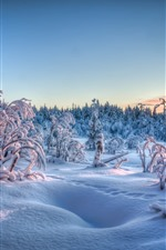 Preview iPhone wallpaper Thick snow, trees, forest, winter, dusk