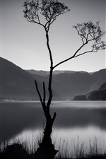 Preview iPhone wallpaper Tree, mountains, lake, black and white picture