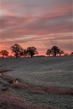 Aperçu iPhone fond d'écranArbres, ciel rouge, coucher de soleil, champs, herbe