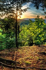 Preview iPhone wallpaper Trees, sunrise, morning, mountain top