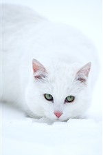 Preview iPhone wallpaper White cat, look, face, eyes, snow