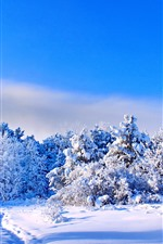 Preview iPhone wallpaper Winter, thick snow, trees, blue sky, shadow