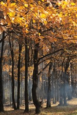 Preview iPhone wallpaper Autumn, yellow leaves, trees, hazy