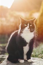 Gato preto, sol, sente-se, luz de fundo