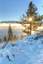 Preview iPhone wallpaper California, Nevada, trees, river, sunrise, morning, winter, USA