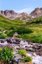 Aperçu iPhone fond d'écranColorado, fleurs, montagnes, pierres, ruisseau, USA