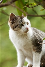 Cute cat look at side, tree, twigs