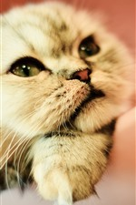 Preview iPhone wallpaper Cute cat, tomcat, face, nose, eyes, hazy background