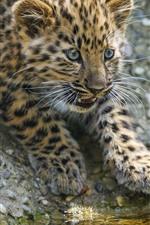 Preview iPhone wallpaper Cute leopard cub, look, eyes, hazy