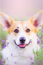 Preview iPhone wallpaper Dog look at you, purple flowers