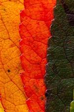 Aperçu iPhone fond d'écranCinq couleurs feuilles, colorées