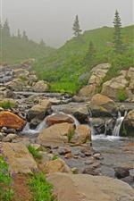 Aperçu iPhone fond d'écranFleurs, pente, ruisseau, pierres, brouillard