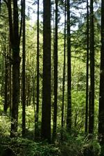 Aperçu iPhone fond d'écranForêt, arbres, branche d'arbre, été