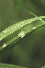 Preview iPhone wallpaper Green grass leaves, water droplets, macro photography