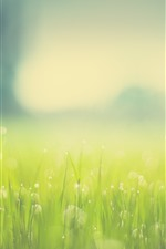 Preview iPhone wallpaper Green grass, light circles, hazy, summer
