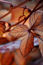 Preview iPhone wallpaper Leaves, wire fence, autumn, hazy