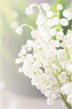 iPhone обои Лилии долины, белые цветы, туманные